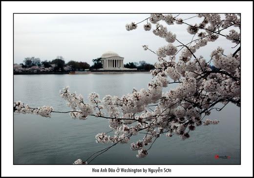 002 Mùa Xuân Washington