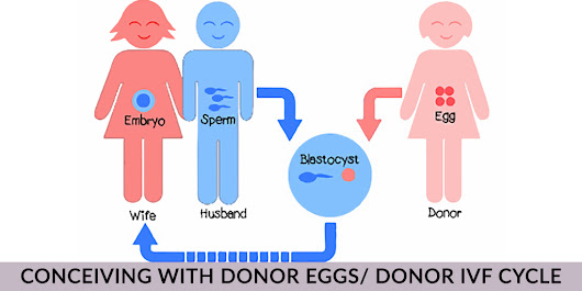 What is Donor Eggs/ Donor IVF Cycle?
