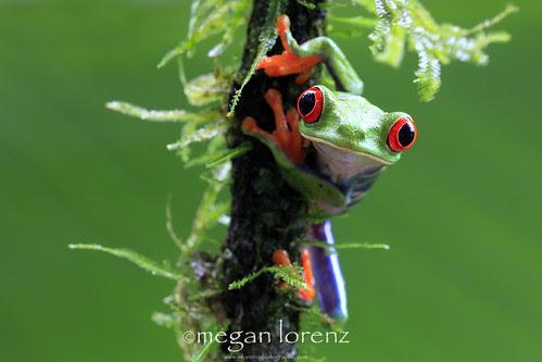 Green by Megan Lorenz
