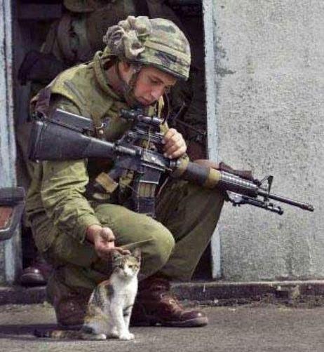 Le chat et le soldat