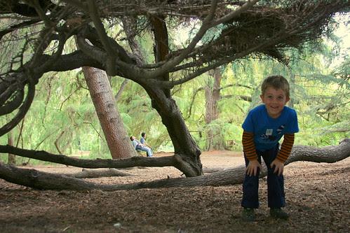 huntington under the cedars