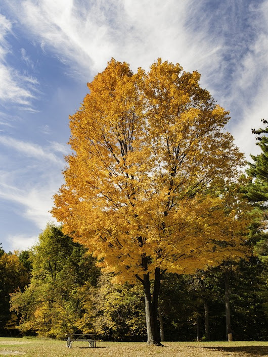The Best Trees to Plant for Fall Foliage