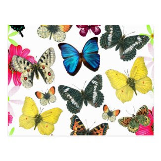Vintage Blue Red Yellow Colorful Butterflies Postcards
