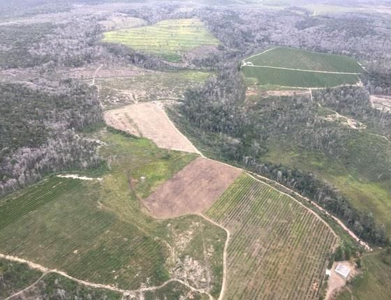 Foto tirada em sobrevoo em Santa Cruz Cabrália, na Bahia, mostra desmatamento da Mata Atlântica na região (Foto:  SOS Mata Atlântica/ Divulgação)