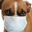 Common Pet Viruses That Can Be Contracted By Humans