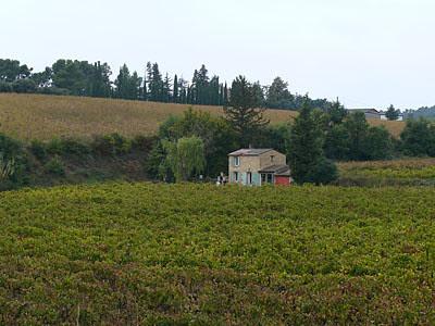 vigne près d'Aix.jpg