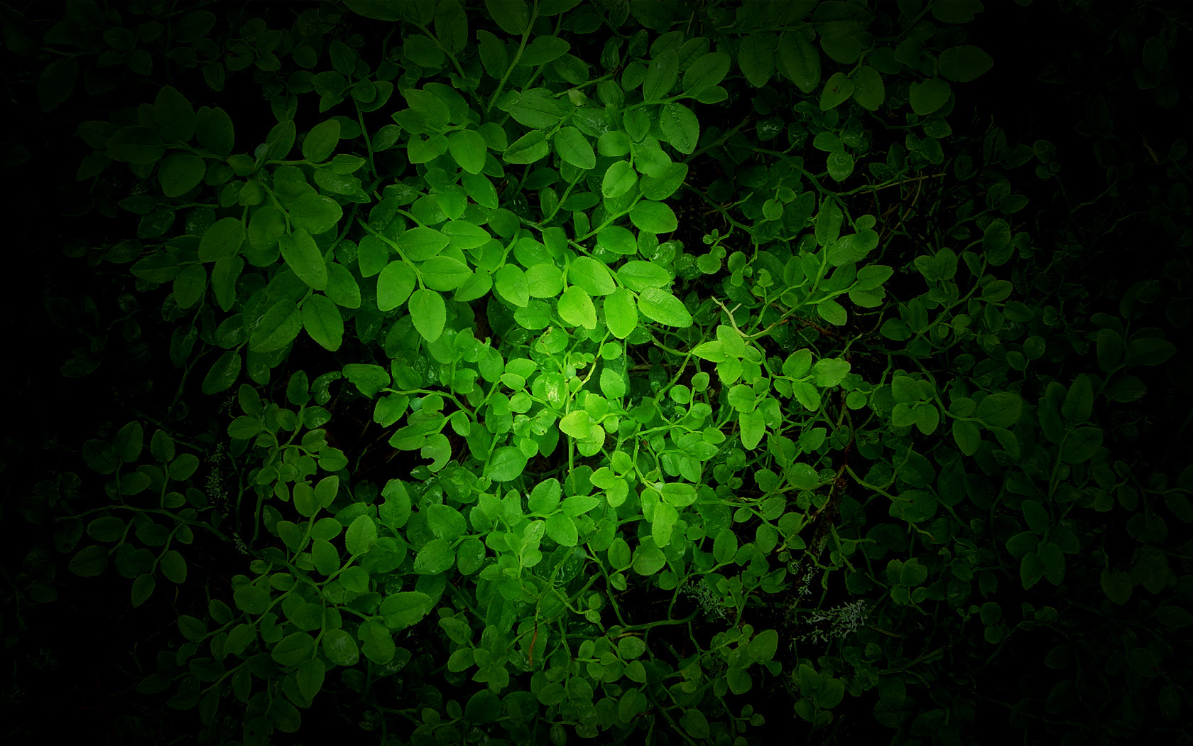 Green Wallpaper  HD Wallpapers Pulse