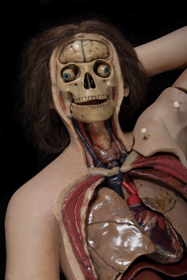 interior-figura-cera-anatomica