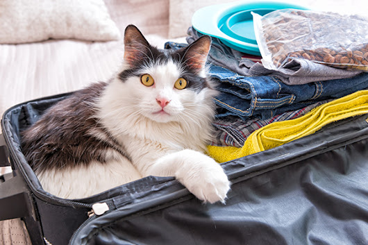 10 Tips for Traveling with Cats on a Road Trip This Summer | Catster