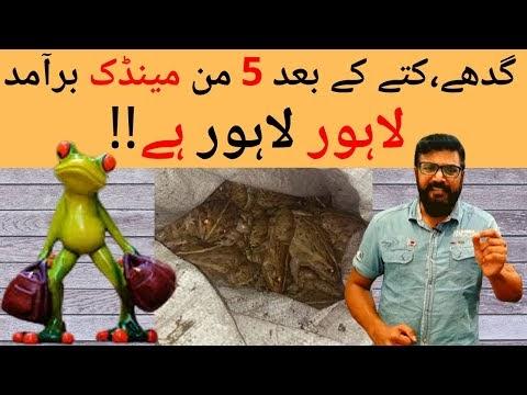 لاہور سے ملنے والے منڈکوں ، گدھوں کی حقیقت اور معاشرتی گراوٹ پر ایک بہتریں ویڈیو