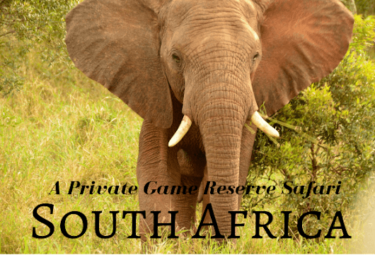 What to expect on a Private Game Reserve Safari in South Africa | Heather on her travels