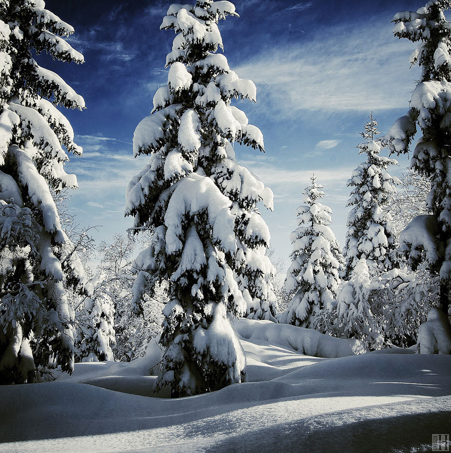 frozenrevolutionary:  Winter   The beauty of winter. So cold. So white. So clean. Never fully appreciated.