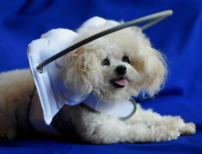 blind-dog-safety-device-muffins-halo-2