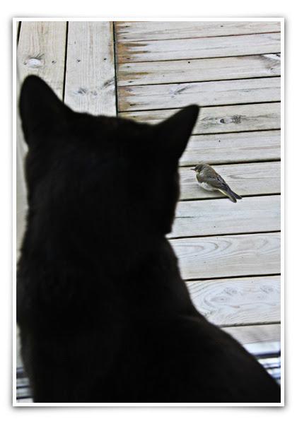 Majken-ochj-fågeln