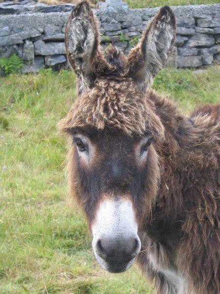 Happy donkey   Photo