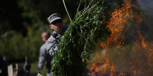 Why Is Marijuana Banned? The Real Reasons Are Worse Than You Think