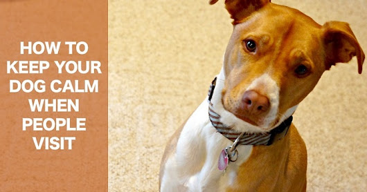 How to Keep Your Dog Calm When People Visit - ThatMutt.com: A Dog Blog