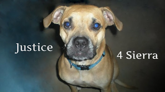 Kansas City Missouri Police Commissioners: Justice for Sierra & All Pets Shot by KCMO PD