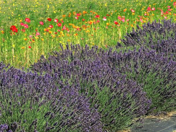 springlike color