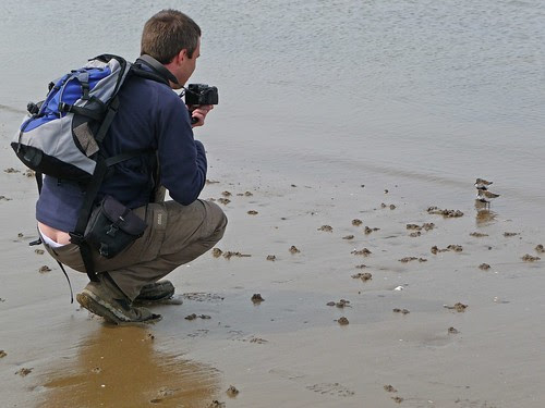 12390 - Me Photographing Dunlin
