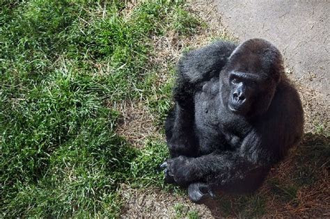 Little Rock Zoo to mark birthday of Trudy, oldest known