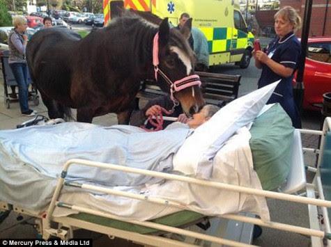 Ούτε ο θάνατος μπορεί να τους χωρίσει – Η απίστευτη φιλία μιας γυναίκας με ένα άλογο