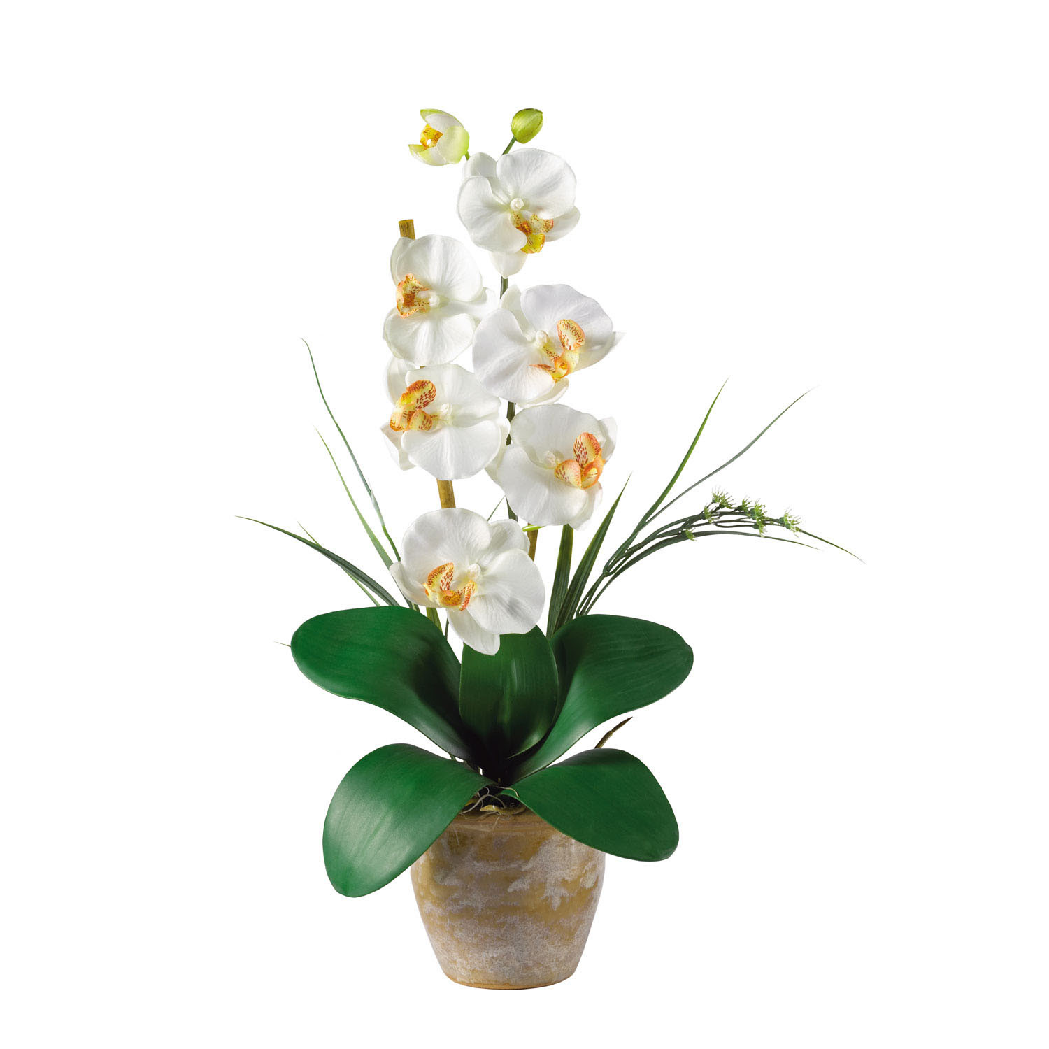 Single Stem Phalaenopsis Orchid Arrangement  1016