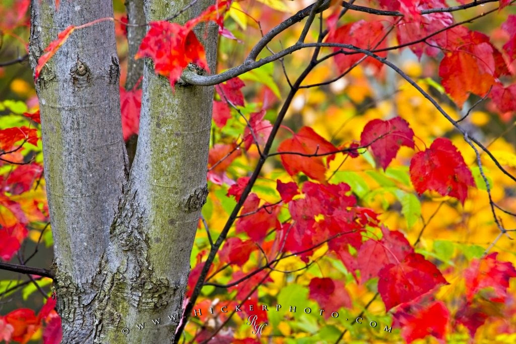 Fall Photography Algonquin Provincial Park Ontario Photo Information