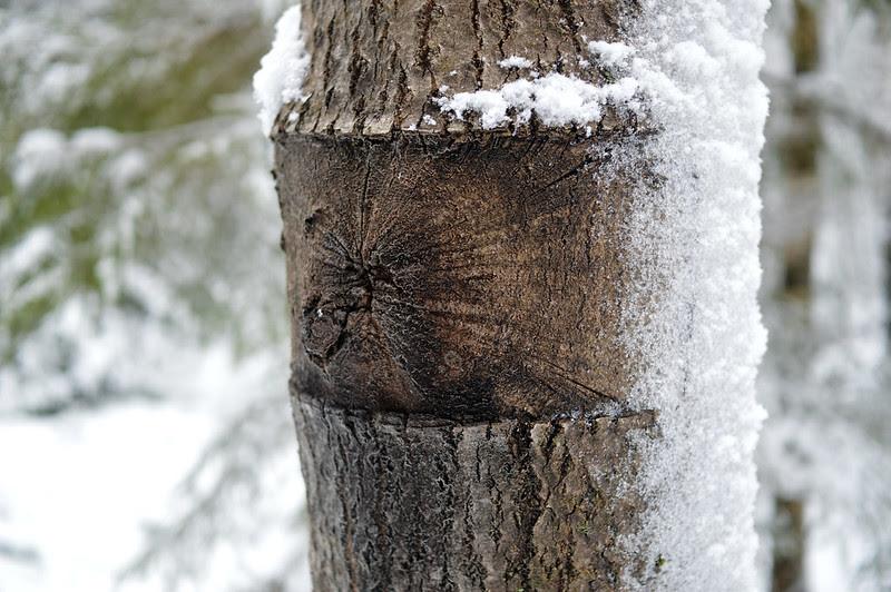055 träd