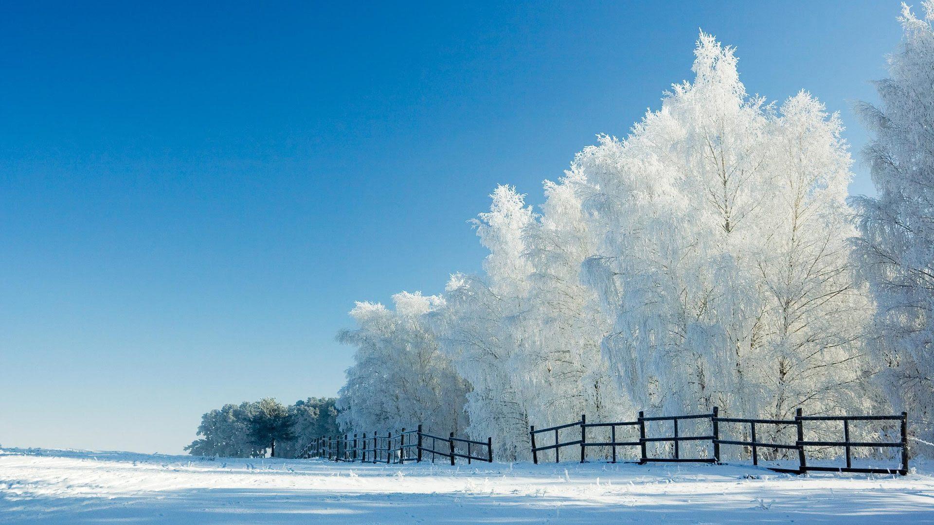 冬の雪の美しい風景のhdの壁紙 15 1920x1080 壁紙ダウンロード 冬