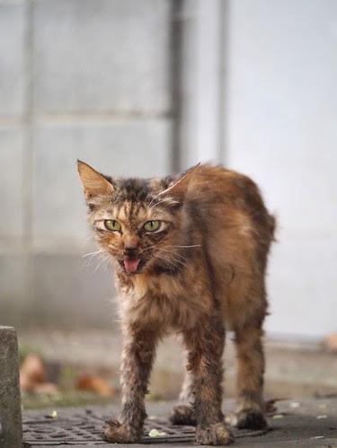 そこでは痩せてよれよれの猫も頑張って生きていた