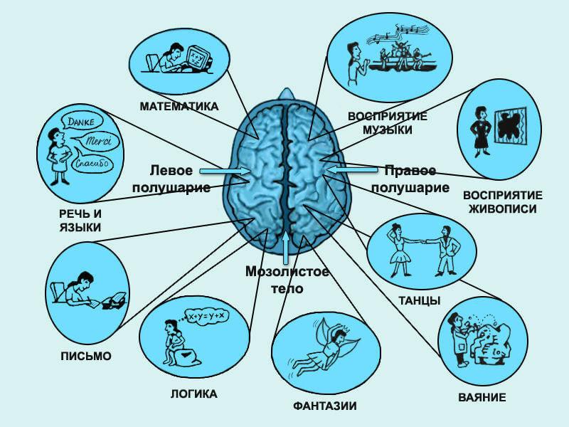 Экспресс-тест на определение доминирующего полушария головного мозга за 2 минуты