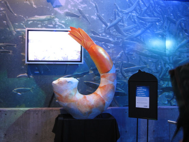 the big shrimp