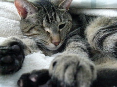 Maggie resting