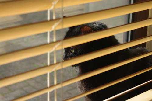 Cat and Blinds by ford dagenham