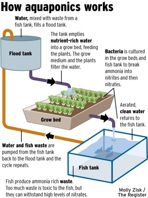 How Aquaponics Works: Important Facts About How to Build a Home Grown Aquaponics System - Vertical-Gardener
