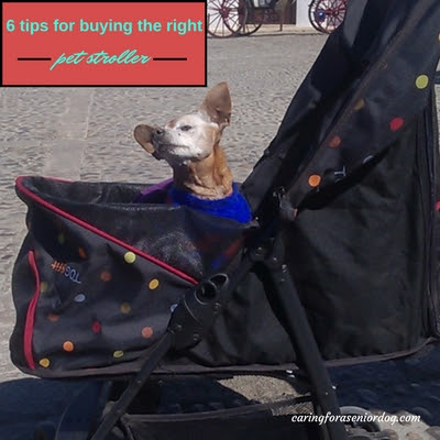 6 Tips For Buying the Right Pet Stroller - Caring For a Senior Dog