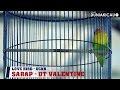 Love Bird SARAP Makin Konlset Pada Acara Latpres Bintang Millenium Radjawali Indonesia