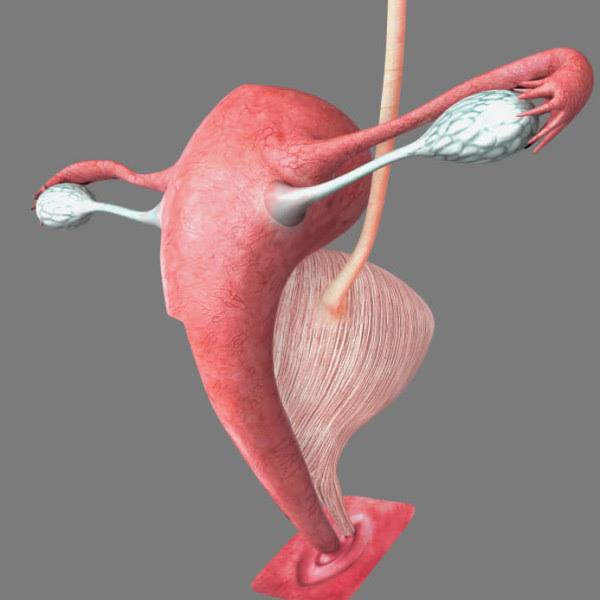 Trasplante de útero entre madre e hija. El niño nacido, la madre y la abuela están sanos después de 3 años del trasplante.