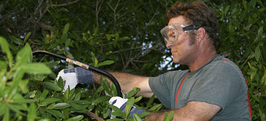 About Us | Columbia Pruning, Tree Removal and Pest Management