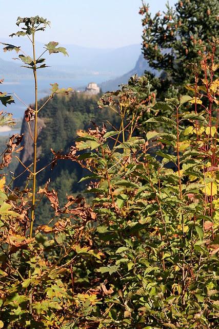 crown point, autumn '09