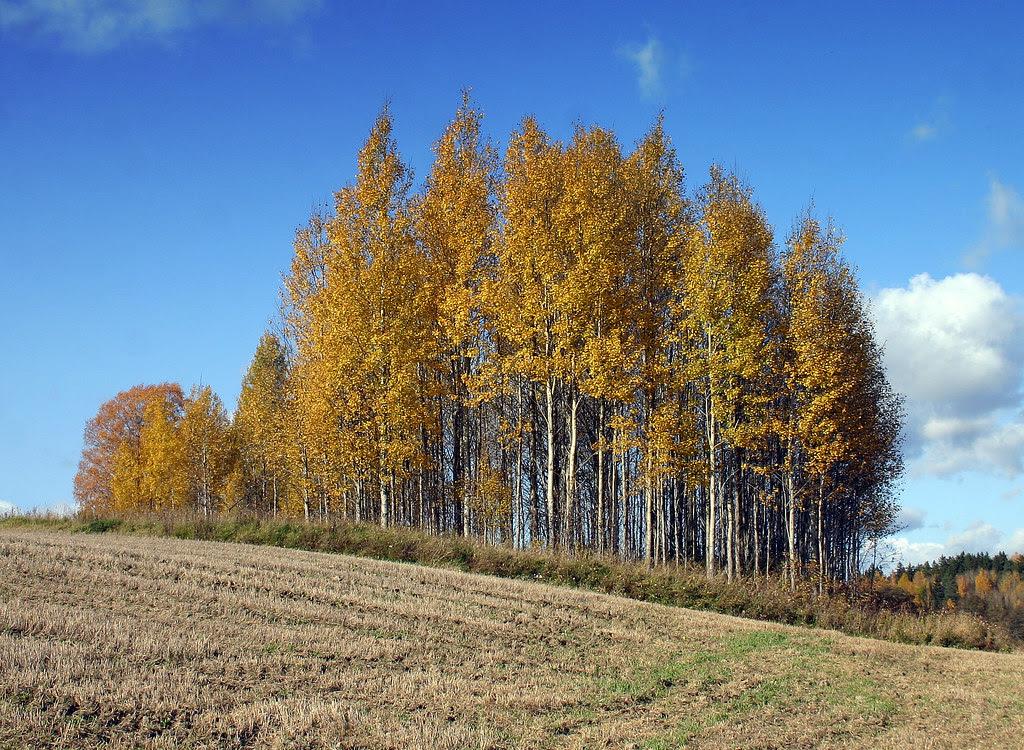 Autumn Wallpaper 2.0
