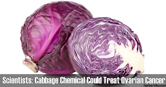 Scientists: Cabbage Chemical Could Treat Ovarian Cancer - Herbs Info