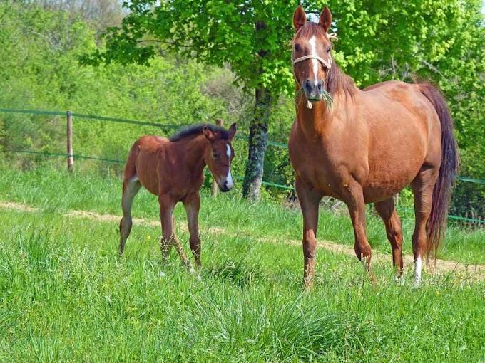 Consejos básicos para la cría de caballos