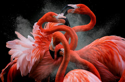 Las fotografías ganadoras del concurso Bird Photographer of the Year 2018 - Cultura Inquieta