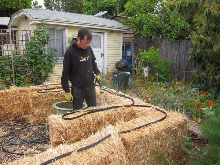 straw bale garden--watering the bales