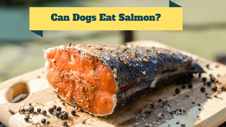 Can Dogs Eat Salmon, Skin and Bones? - Smart Dog Owners