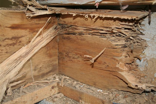 Top 3 Ways to Prevent Subterranean Termites - PCA Inspections