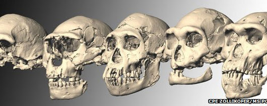 A new hominid fossil may simplify the story of human evolution