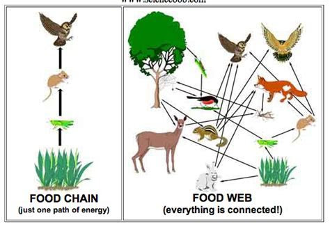 Energy Flow, Food Chains, and Food Webs   Science 6 at FMS
